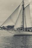 Massachusetts, Schooner Festival, Schooners in Gloucester Harbor Photographic PrintWalter Bibikow