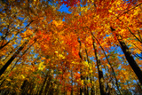 USA, West Lafayette, Indiana, Trees at the Celery Bog in Autumn Photographic Print by Rona Schwarz