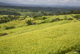 Jatiluwih, Bali, Indonesia. Terraced Rice Paddies Photographic Print by Charles Cecil
