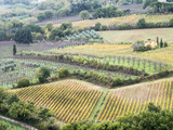 Italy, Tuscany. Vineyards and Olive Trees in Autumn in the Val Dorcia Photographic Print by Julie Eggers