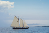 Massachusetts, Schooner Festival, Schooners in Gloucester Harbor Photographic Print by Walter Bibikow