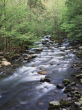 Tennessee, Great Smoky Mountains National Park, a Mountain Stream Photographic Print by Christopher Talbot Frank