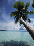 Palau, Micronesia, Palm Tree at Palau Lagoon Photographic Print by Stuart Westmorland