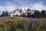 Mount Rainier National Park, Mount Rainier Photographic Print by Ken Archer