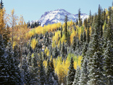 Colorado, San Juan Mts, First Snow and Fall Colors of Aspen Trees Photographic Print by Christopher Talbot Frank