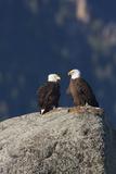 Bald Eagle Pair on Boulder Photographic Print by Ken Archer