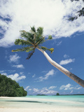 Palau, Palm Trees Along Tropical Beach Photographic Print by Stuart Westmorland