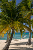 Palm Trees and Hammock at Seven Mile Beach, Grand Cayman, West Indies Photographic Print by Brian Jannsen