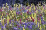 Alpine Wildflowers, Mount Rainier Photographic Print by Ken Archer