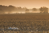 Georgia, Americus, Cotton Field at Dawn Photographic Print by Walter Bibikow