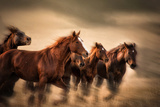 Running Horses, Blur and Flying Manes Photographic Print by Sheila Haddad