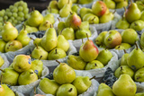 Canada, Montreal, Marche Jean Talon Market, Pears Photographic Print by Walter Bibikow