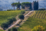 Vineyards Draping Hillsides Near Monte Falco Photographic Print by Terry Eggers
