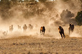 Horses Running in Dust with Wranglers on New Mexico Ranch Photographic Print by Sheila Haddad
