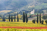 Italy, Tuscany. Vineyard and Olive Trees with the Abbey of Sant Antimo Photographic Print by Julie Eggers