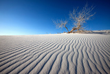 Stark Landscape, White Sands National Monument, New Mexico Photographic Print by Susan Degginger