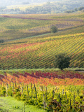 Italy, Tuscany, Val Dorcia. Colorful Vineyards and Olive Trees in Fall Photographic Print by Julie Eggers