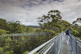 Walter Bibikow - Australia, Walpole Nornalup, Valley of the Giants Tree Top Walk Fotografická reprodukce