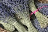France, Provence Alpes Cote Dazur, Vaucluse, Roussillon. Lavender Photographic Print by Kevin Oke
