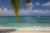 Palm Trees Along Seven Mile Beach, Grand Cayman, West Indies Photographic Print by Brian Jannsen