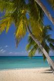 Seven Mile Beach, Grand Cayman, Cayman Islands, West Indies Papier Photo par Brian Jannsen