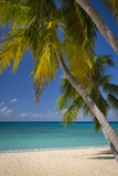 Seven Mile Beach, Grand Cayman, Cayman Islands, West Indies Fotografisk tryk af Brian Jannsen