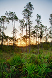 Sunrise in Long Pine Area of Everglades National Park Photographic Print by Terry Eggers