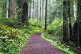 Hiking Trail in the Redwoods Photographic Print by Terry Eggers