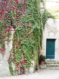 Italy, Tuscany, Monticchiello. Red Ivy Covering the Walls of Buildings Photographic Print by Julie Eggers