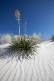 Yucca, White Sands National Monument, New Mexico Photographic Print by Susan Degginger