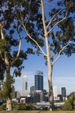 Australia, Perth, City Skyline from Kings Park, Late Afternoon Photographic Print by Walter Bibikow