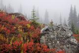Mount Rainier National Park, Autumn Fog Photographic Print by Ken Archer