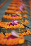 India, Bodh Gaya, Mahabodhi Complex, Great Awakening Temple, Flowers Photographic Print by Anthony Asael