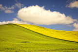 Rolling Hills of Canola and Pea Fields with Fresh Spring Color Photographic Print by Terry Eggers