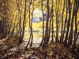 California, Sierra Nevada, Inyo Nf, Autumn Aspens Along Rush Creek Photographic Print by Christopher Talbot Frank