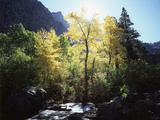 California, Sierra Nevada, Fall Colors of Cottonwood Trees on a Creek Photographic Print by Christopher Talbot Frank
