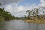Australia, Daintree National Park, Daintree River. Rainforest Fotografisk tryk af Cindy Miller Hopkins