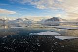 Antarctica, Near Adelaide Island. the Gullet. Ice Floes at Sunset Fotografisk tryk af Inger Hogstrom