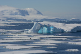 Antarctica. Antarctic Circle. the Gullet. Iceberg and Ice Floes Photographic Print by Inger Hogstrom