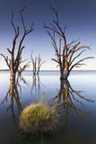 Australia, Murray River Valley, Barmera, Lake Bonney, Petrified Trees Photographic Print by Walter Bibikow