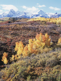 Colorado, San Juan Mountains, Autumn Colors of Aspen at Dallas Divide Photographic Print by Christopher Talbot Frank