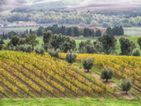 Europe, Italy, Tuscany. Vineyards and Olive Trees in Autumn Photographic Print by Julie Eggers