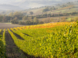 Europe, Italy, Tuscany. Autumn Vineyards in Bright Colors Lámina fotográfica por Julie Eggers