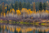 Autumn Aspens Reflect into the Pend Oreille River, Washington Photographic Print by Chuck Haney