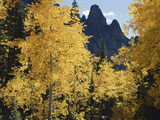 Colorado, Rocky Mts, Uncompahgre Nf. Fall Colors of Aspen Trees Photographic Print by Christopher Talbot Frank
