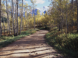 California, Sierra Nevada, Inyo Nf, Dirt Road, Fall Colors of Aspens Photographic Print by Christopher Talbot Frank
