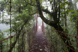 Bridge, Sendero Wilford Trail, Monteverde Cloud Forest, Costa Rica Photographic Print by Thomas Wiewandt
