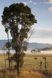 Australia, Victoria, Yarra Valley, Healesville, Field with Fog, Dawn Photographic Print by Walter Bibikow