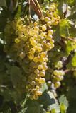 Australia, Clare Valley, Sevenhill, Winery Vineyard Photographic Print by Walter Bibikow