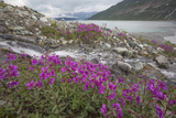 Alaska, Glacier Bay National Park. Small Stream Cascade Photographic Print by Jaynes Gallery